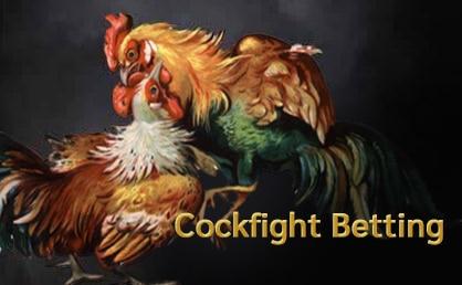 Muay Step Thai Cockfight Betting